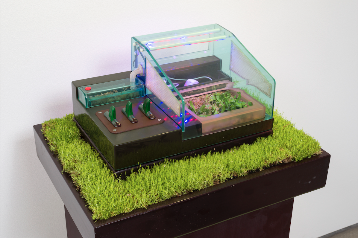 Carl Cheng, Supply & Demand (1972). Venus flytrap, insects, plastic case, humidifier, wiring, grass, wood pedestal, grow lamps, 47 x 24 x 18.6 inches. Image courtesy of Cherry and Martin, Los Angeles. Photo: Jeff McClane.